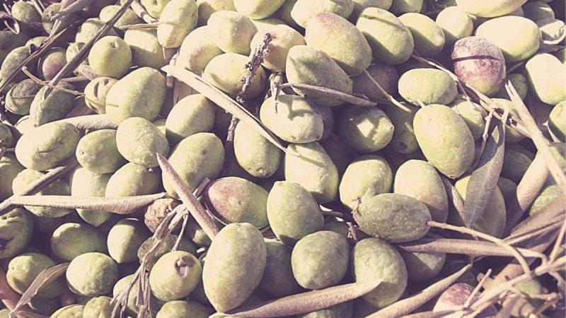 How are kalamata olives made blog banner